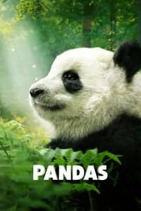 Nonton Film Pandas (2018) Subtitle Indonesia Streaming Movie Download