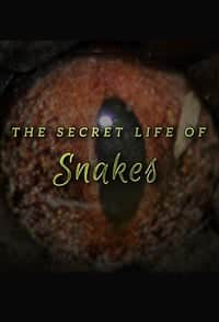 Nonton Film The Secret Life of Snakes (2016) Subtitle Indonesia Streaming Movie Download